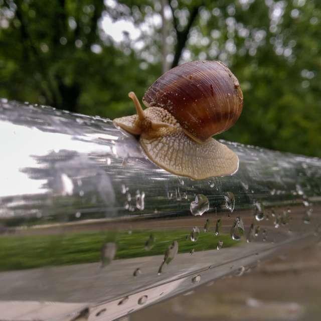 Кишинёв, улитка, дождь