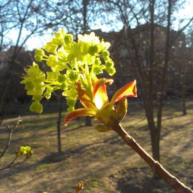 Весна іде, красу несе