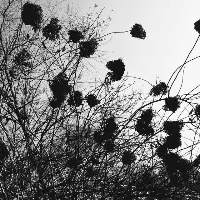 花は種となり。