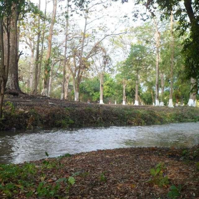 Bosque de Piritu - Portuguesa