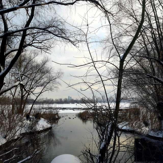 Прогулка  зимним лесом.