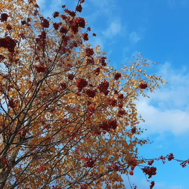 Fotos del Planta. Pronósticos del tiempo con hermosas fotos de Olga_K en Mundo