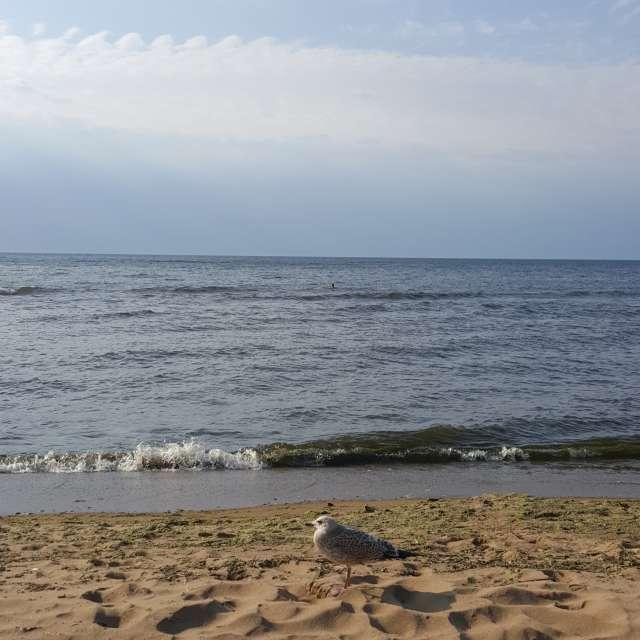 Волна и чайка