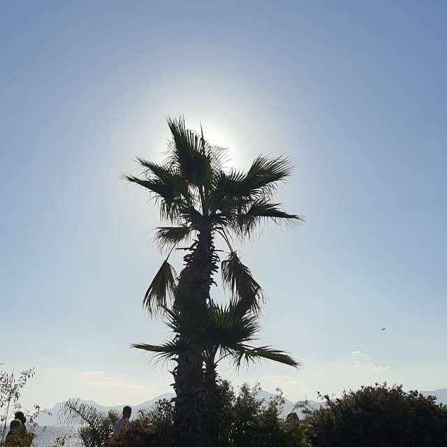 Fotos del Planta. Pronósticos del tiempo con hermosas fotos de Lluzzilell en Mundo