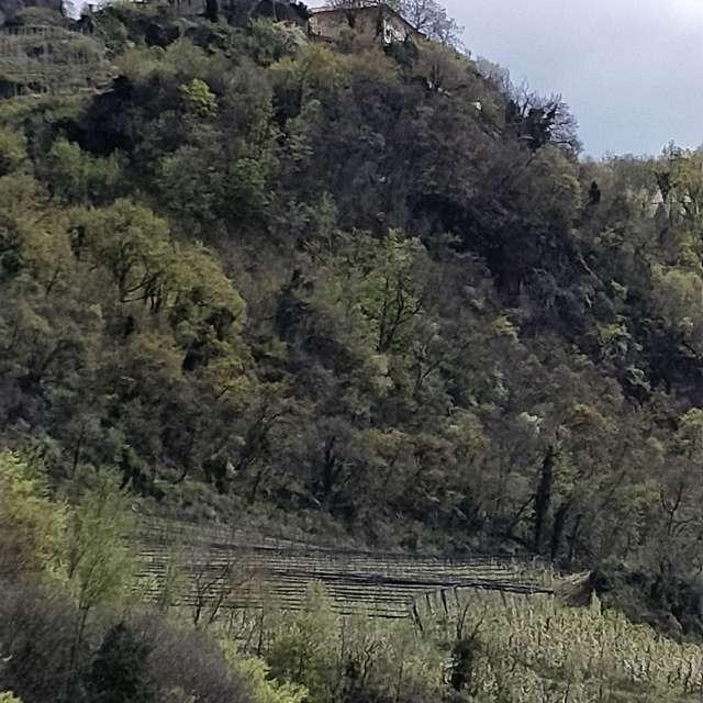Merano Castel Gatto