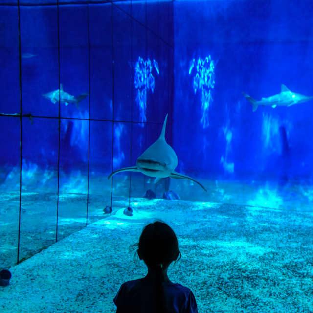 girl watching a shark