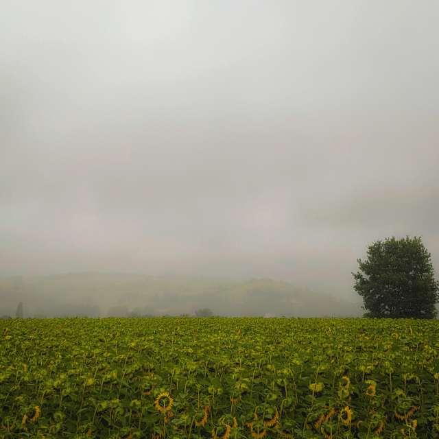 Brume sur le Volvestre...