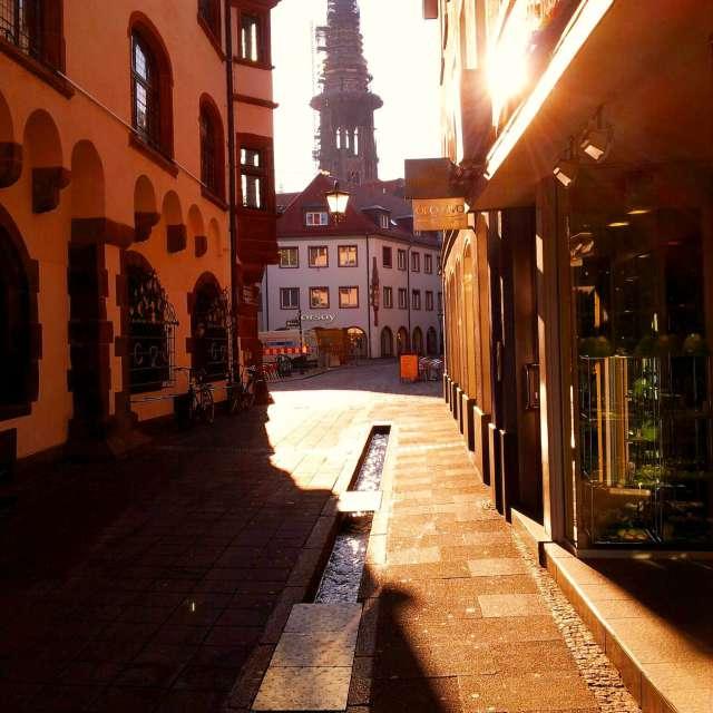Turmfalke-Freiburg im Breisgau