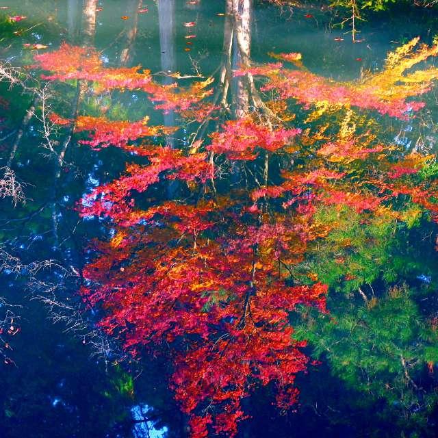 湖面の紅葉🍁