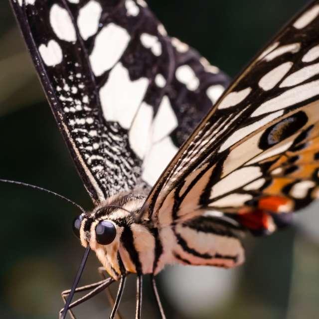 Butterfly in Laos