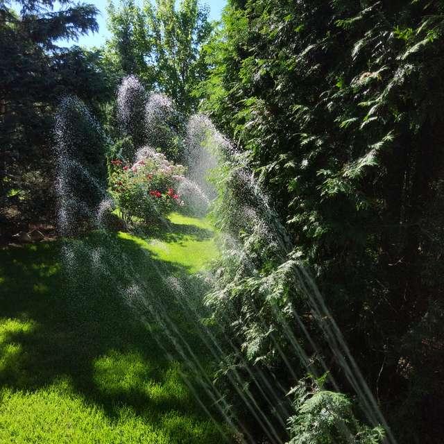 May garden when watering