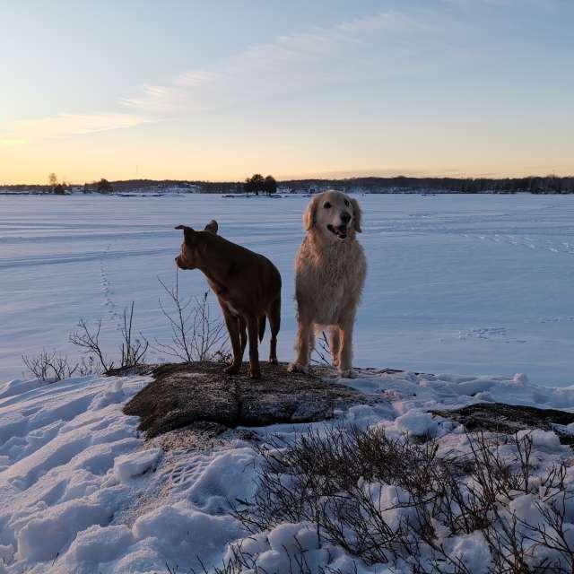 Pups at the lake