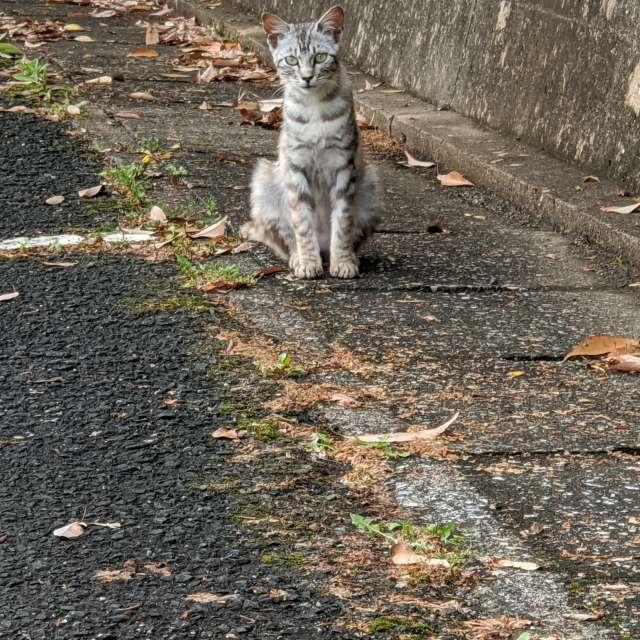出会った野良の子猫