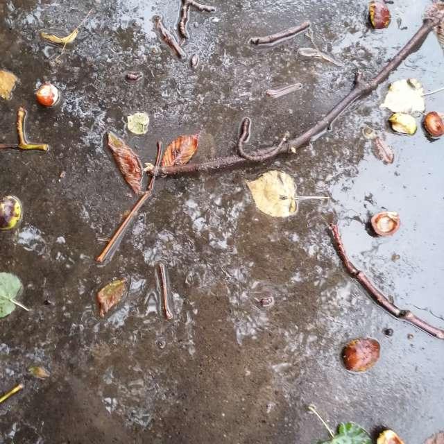 Дорога, дождь, каштаны