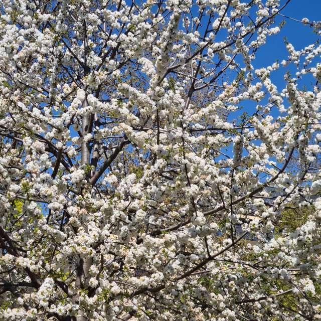 Frühling kann kommen