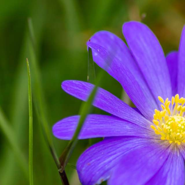 Beautiful blue flower blossom