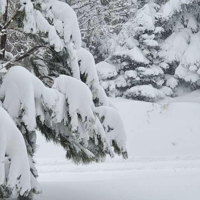 """22"""" of snow, South of Denver."""