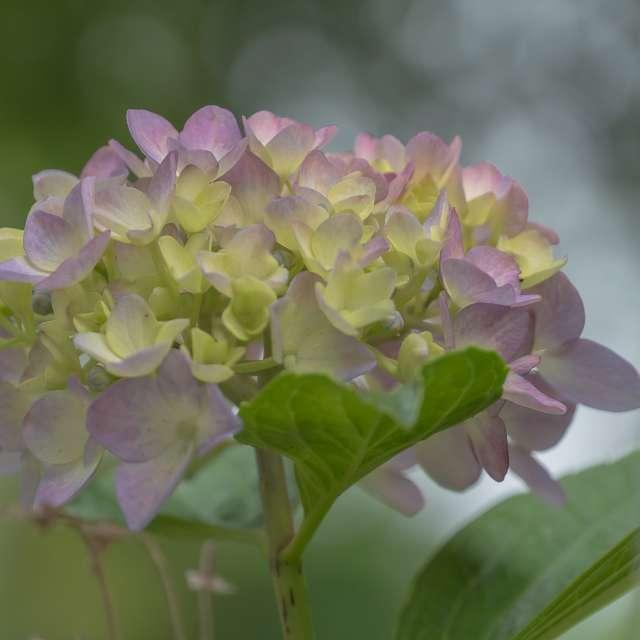 雨を呼ぶ花