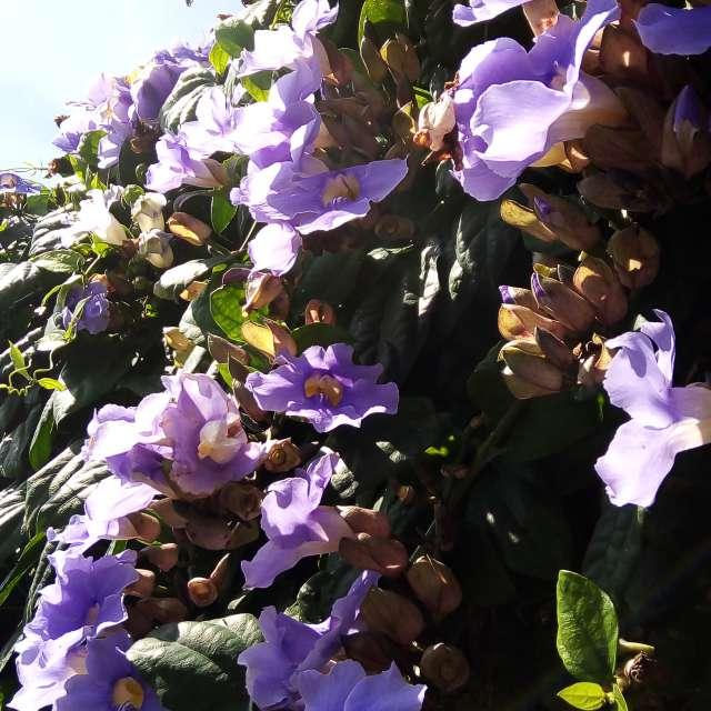 Little lilac flowers