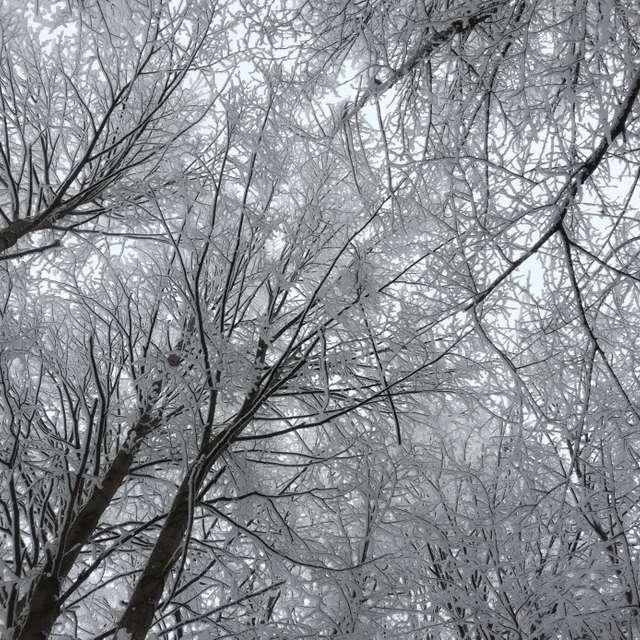 Небо в зимних деревьях