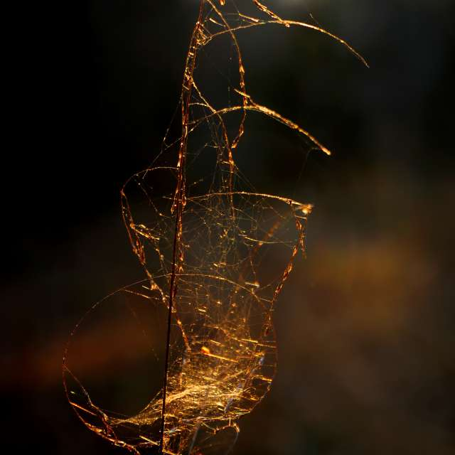 Golden Hour Spiderweb