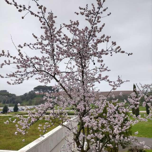 Buona Primavera a tutti 😀💓🙏👍