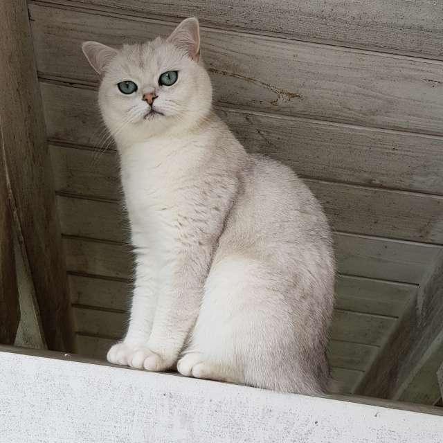 Weisse Katze beim Dach