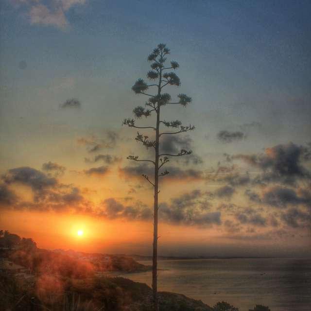 Sunrise on holiday