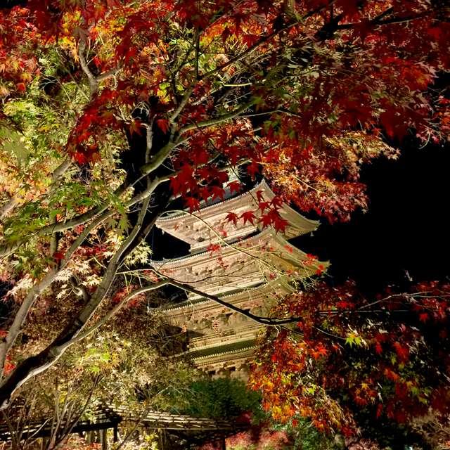 荘厳な東寺のライトアップ