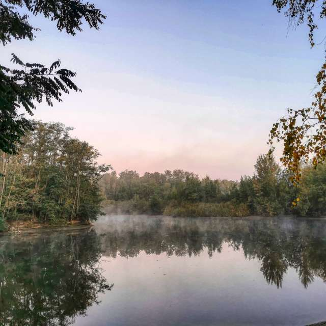 The mists by the lake