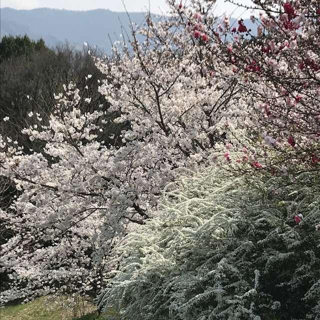 この世の春
