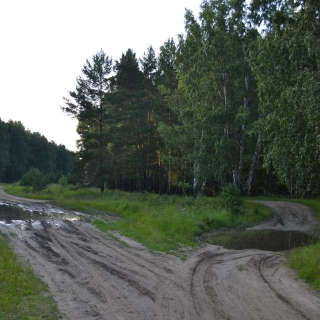 Перепутье в лесу