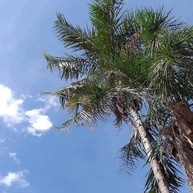 Foto tirada em dia ensolarado