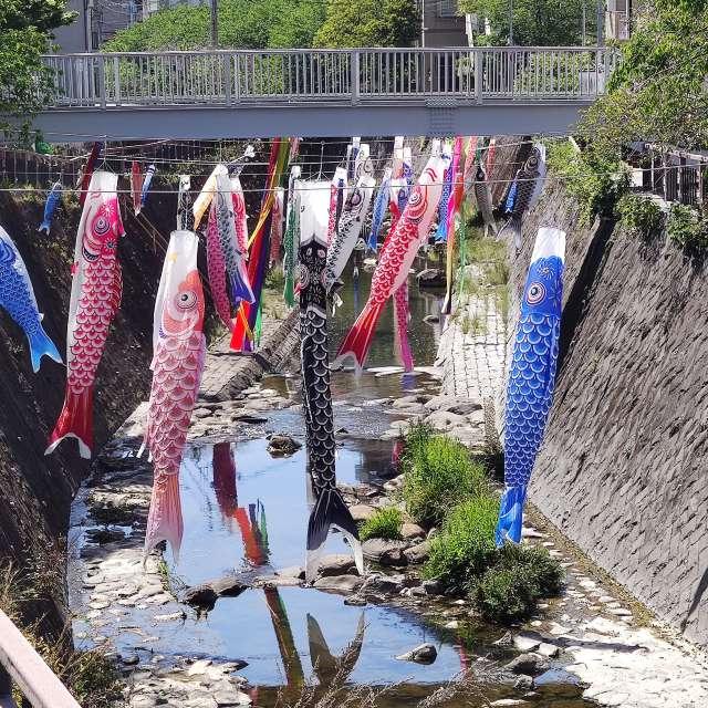 Koinobori season in Nagasaki