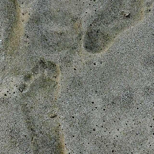Отпечатъци в пясъка