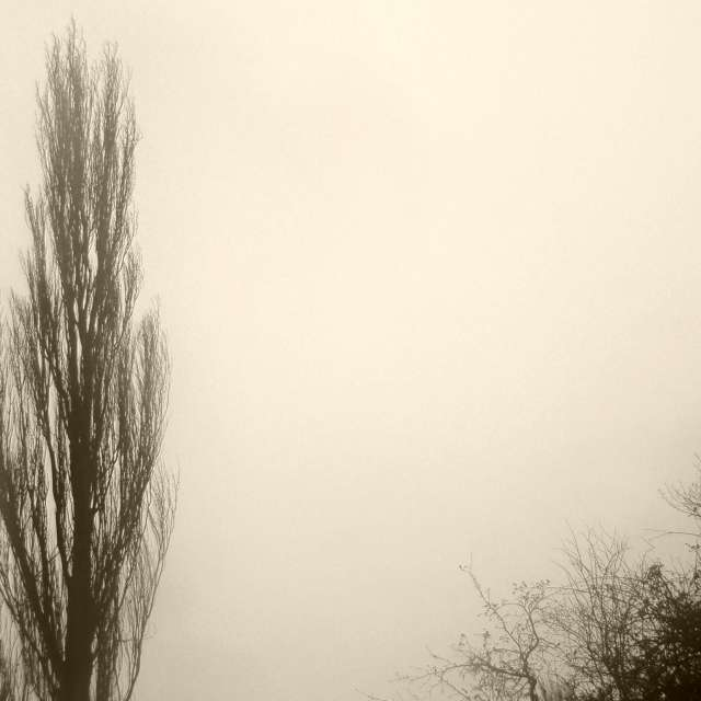Trees in mist, Oxford