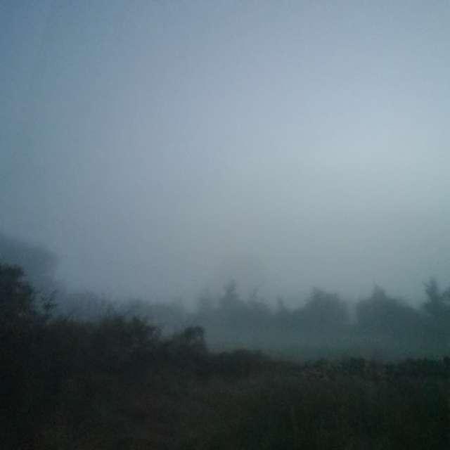 Niebla en el monte