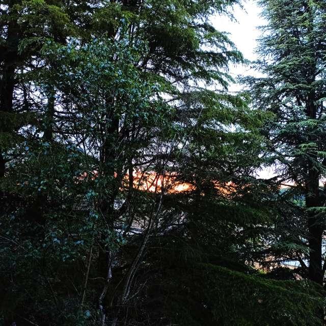 Tramonto tra gli alberi