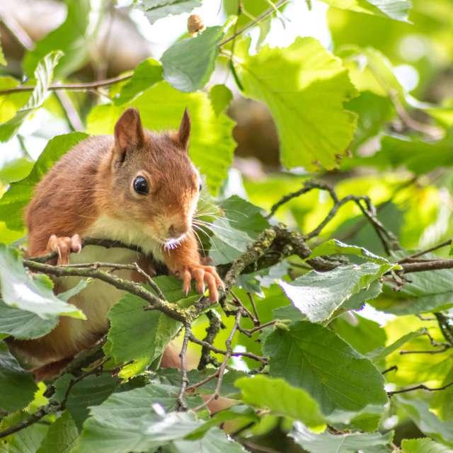 Cute little squirrel in a tree
