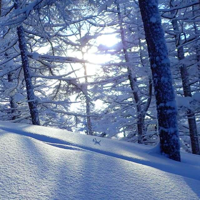 霧氷と朝日