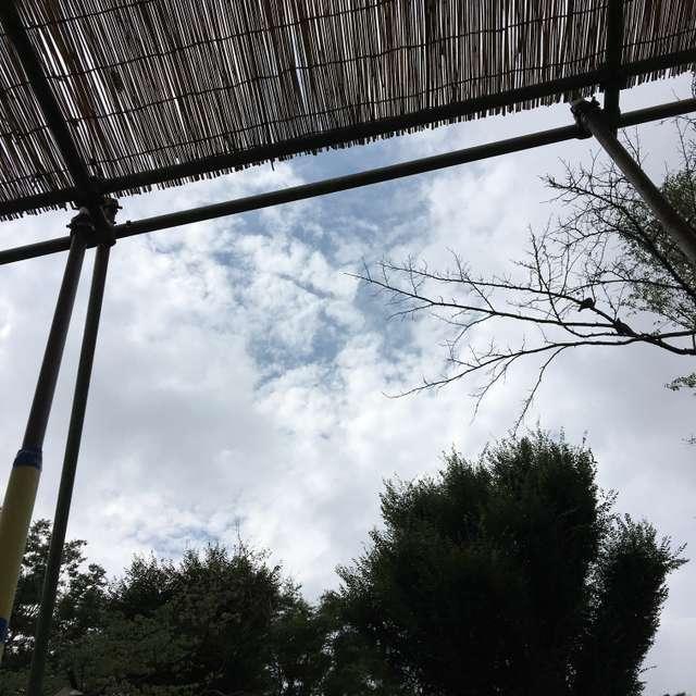 じゃぶじゃぶ池から空を見上げて