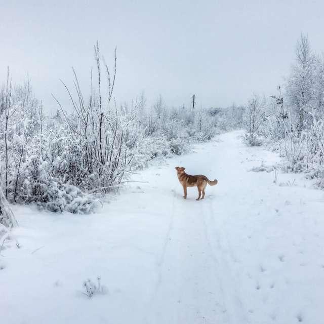 Собака на зимней дороге