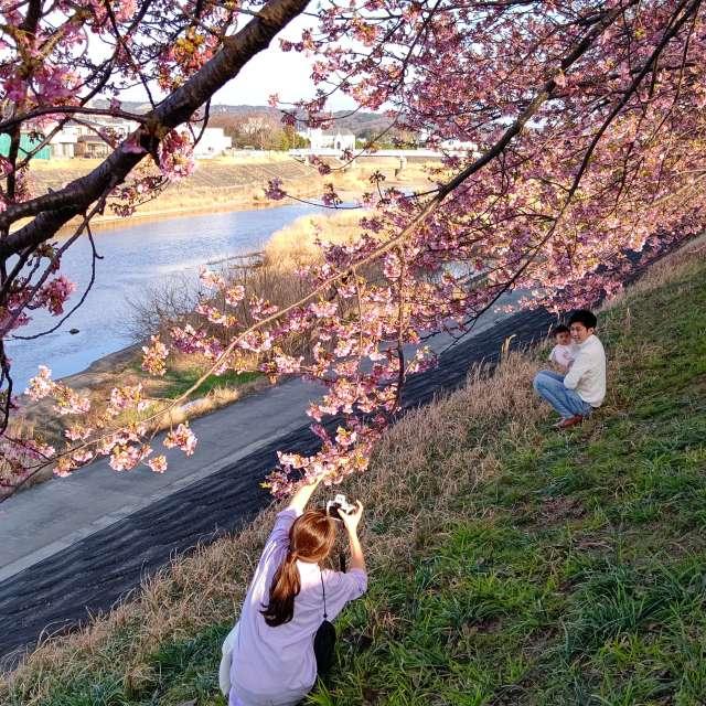 河津桜🌸を撮そうとしている若年ファミリー👪️