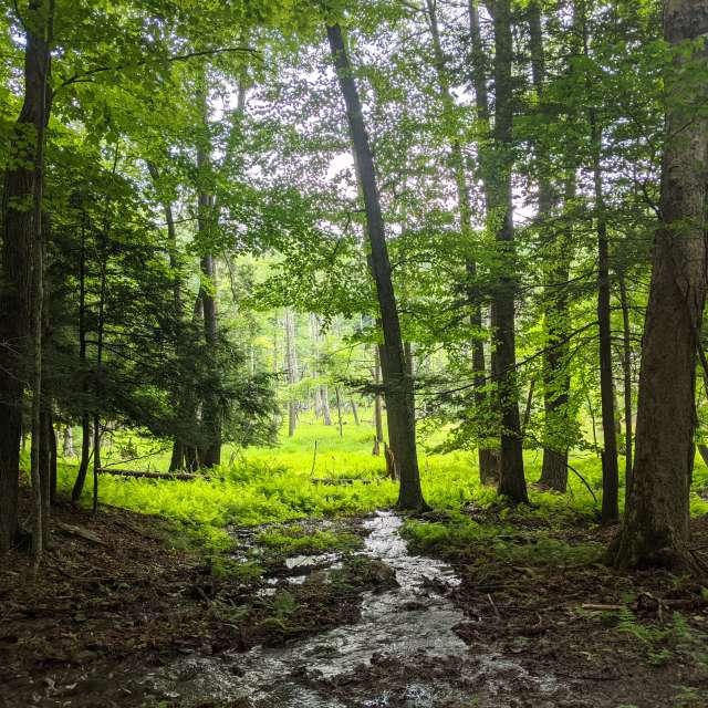 Bluestone Wild Forest.