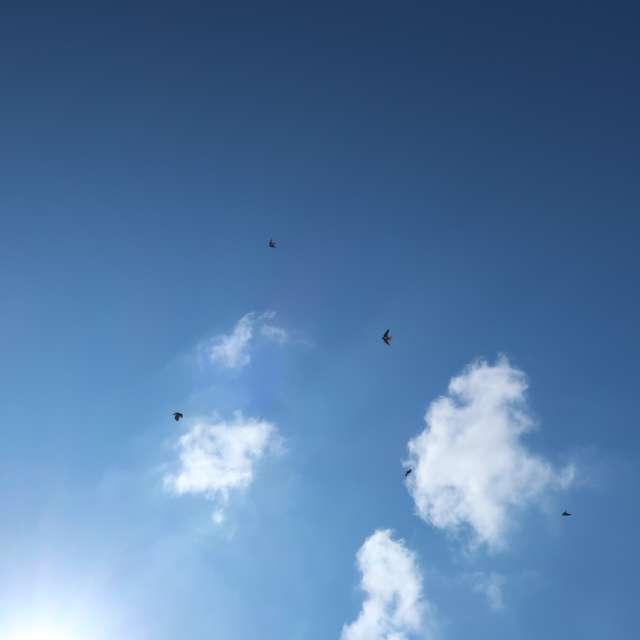 Swallows in flight❤🖤