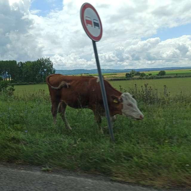Pic taken from moving car :)