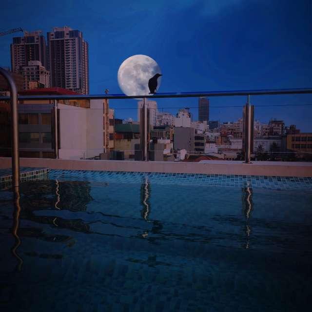 Rooftopswimmingpool Sri Lanka
