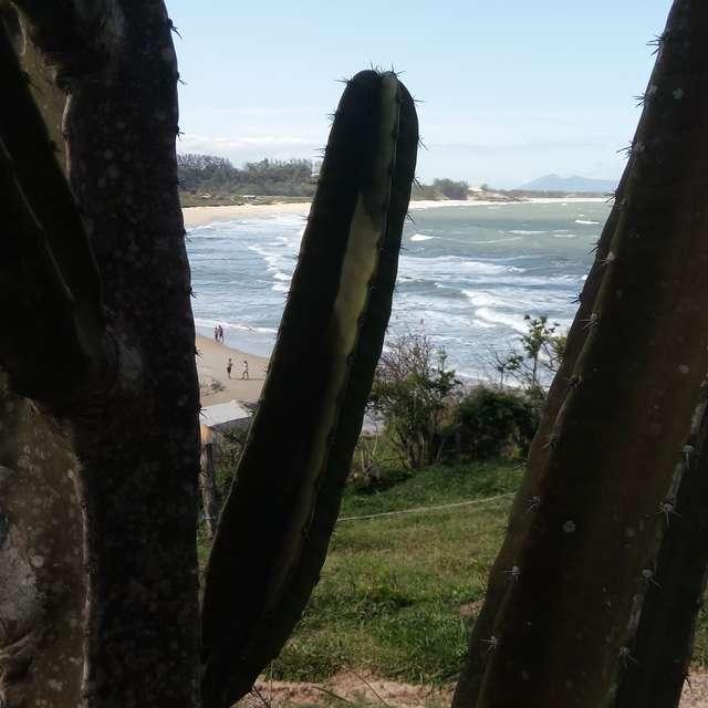 Cactos pro mar