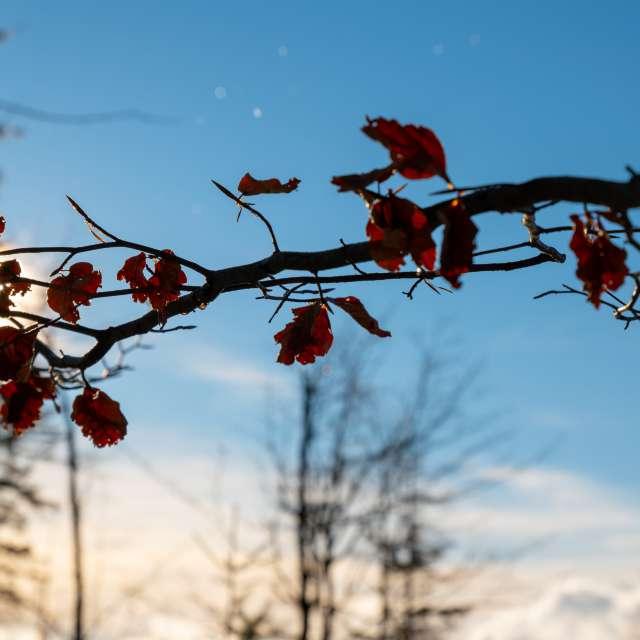 wiatr smagający liście
