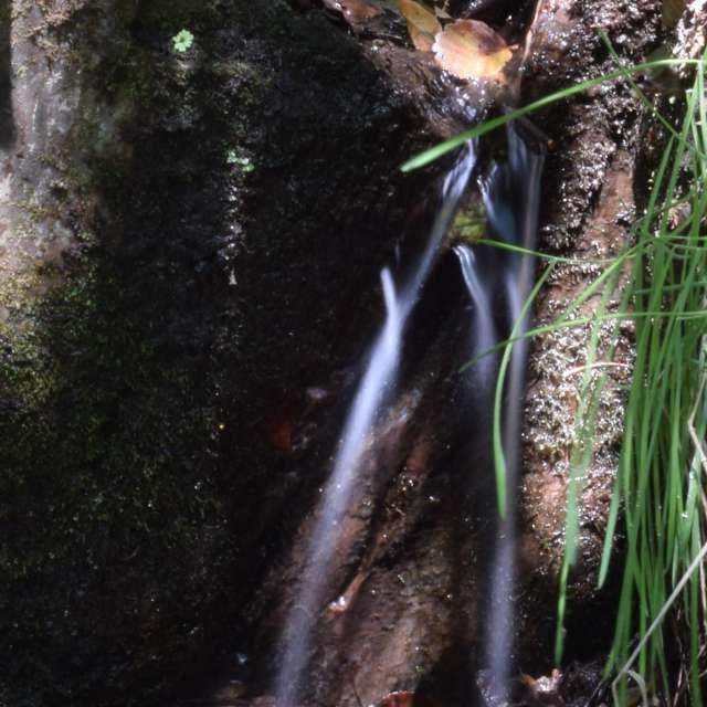 Agua entre ramas